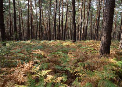 dieses Foto zeigt den Wald in der Nähe von St. Martin